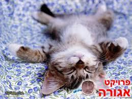 גורי חתולים מקסימים