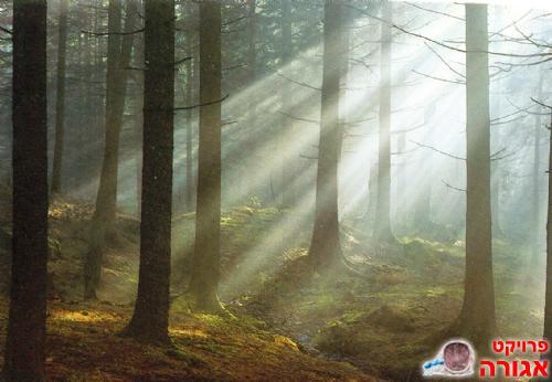 תמונה של יער שצילמתי במסגרת לימודיי