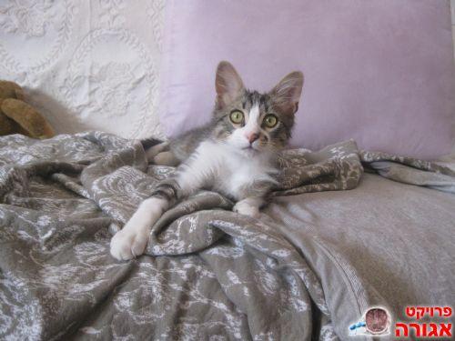 לאקי החתלתול מחפש בית חם