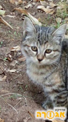 גור חתולים מתוקי בן כחודשיים