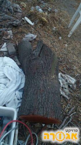 גזעי עץ להסקה לחימום טבעי