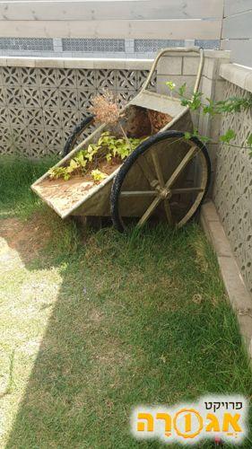 לגינה מריצה ( מנתניה)