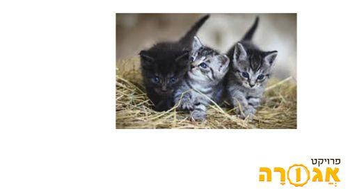 שלושה גורי חתולים מקסימים